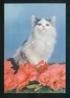 Gato. Fabricación Italiana. Circulada 1965. - Gatos