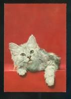 Gato. Ed. D3 Nº 1928-1. Fabricación Italiana. Nueva. - Gatos