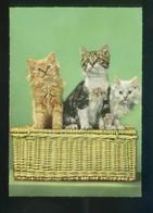 Gato. Ed. D3 Nº 1928-2. Fabricación Italiana. Nueva. - Gatos