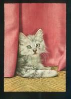 Gato. Ed. D3 Nº 1928-5. Fabricación Italiana. Nueva. - Gatos