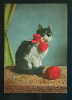 Gato. Ed. D3 Nº 1928-7. Fabricación Italiana. Nueva. - Gatos