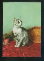 Gato. Ed. D3 Nº 1928-8. Fabricación Italiana. Nueva. - Gatos