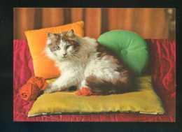 Gato. Ed. D3 Nº 1984-4. Fabricación Italiana. Nueva. - Gatos