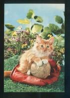 Gato. Ed. D3 Nº 1860-1. Fabricación Italiana. Nueva. - Gatos