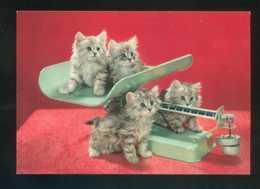 Gato. Ed. D3 Nº 1860-6. Fabricación Italiana. Nueva. - Gatos