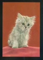 Gato. Ed. D3 Nº 1865-6. Fabricación Italiana. Nueva. - Gatos
