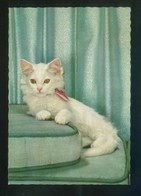 Gato. Ed. D3 Nº 1862-1. Fabricación Italiana. Nueva. - Gatos
