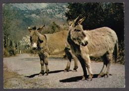 89412/ ANES, Sur Les Routes De Corse - Asino