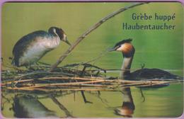 Télécarte Luxembourg °° TS25 - Le Grèbe Oiseau De L'année  -Orga1- 50u - 2001 - RV. - Luxembourg