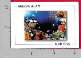 CARTOLINA VG EGITTO - MARSA ALAM - Red Sea - 11 X 16 - ANN. 2006 - Egitto