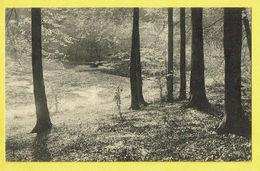 * Boitsfort - Watermaal Bosvoorde (Bruxelles) * (Nels, Ern Thill) Foret De Soignes, étang De L'ermite, Bos, Rare, Old - Watermael-Boitsfort - Watermaal-Bosvoorde