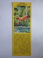 """Segnalibro """"ENTE NAZIONALE PER LA PROTEZIONE DEGLI ANIMALI - CAPRIOLO"""" Anni '50 - Segnalibri"""