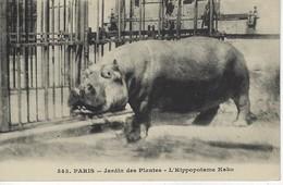 CPA ANIMAUX Et FAUNE - L'HIPPOPOTAME KAKO - Jardin Des Plantes - PARIS - Hippopotames