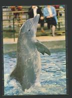 Belgium Pоstсаrd WALIBI Cartе Postalе Dolphin - Delfini