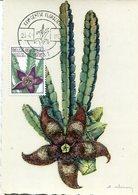 41269 Belgium, Maximum  1965   Exotics Garden,  Cactus - Sukkulenten