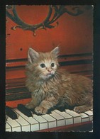 Gato. Ed. Cecami Nº 267. Fabricación Italiana. Al Dorso *Kodak Ektachrome* Nueva. - Gatos