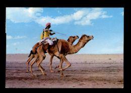 C280 KUWAIT - CAMEL RACE - Koweït