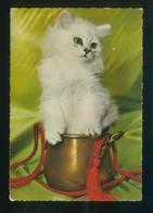 Gato. Ed. Cecami Nº 327. Fabricación Italiana. Al Dorso *Kodak Ektachrome* Nueva. - Gatos
