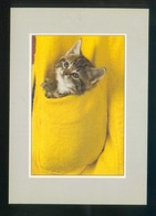 Gato. Ed. Alain Baudry Nº 20112. Fabricación Francesa. Nueva. - Gatos