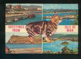 Gato. Isle Of Man. Foto *John Ranscombe* Nueva - Gatos