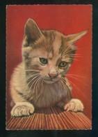 Gato. Ed. Brillant Nº 52517-B. Fabricación Belga. Nueva - Gatos