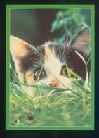 Gato. Ed. Reflex Nº 460. Foto *Tony Briggs* Fabricación Inglesa. Nueva. - Gatos