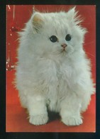 Gato. Sin Datos Nº 7000-1. Dep. Legal B. 28315-XVIII. Nueva. - Gatos