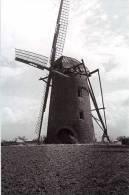 MELDERT Bij Lummen (Limburg) - Molen/moulin - De Verdwenen Stenen Molen Omstreeks 1950 - Lummen