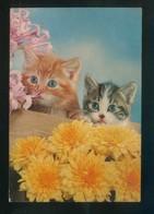 Gato. Ed. Oscar Color Nº 4. Dep. Legal B. 10986-X. Nueva. - Gatos