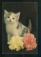 Gato. Ed. Oscar Color Nº 6. Dep. Legal B. 10988-X. Nueva. - Gatos