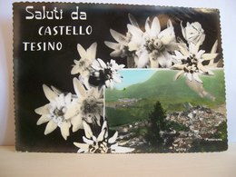 1962 - Trento - Saluti Da Castello Tesino - Panorama - Stella Alpina Fiori - Saluti Da.../ Gruss Aus...