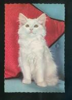 Gato. Ed. C. Y Z. Nº 6321. Dep. Legal B. 15726-III. Nueva. - Gatos