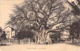 MADAGASCAR Madagasikara - TANANARIVE : Un Baobab - CPA - Madagaskar - ARBRE Tree Arbre Bome Boom Albero árbol - Madagascar