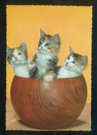 Gato. Ed. C. Y Z. Nº 6548. Dep. Legal B. 546-VI. Nueva. - Gatos