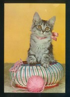 Gato. Ed. C. Y Z. Nº 6113. Dep. Legal B. 12975-III. Nueva. - Gatos