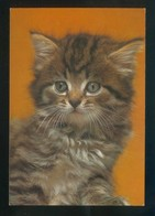 Gato. Ed. C. Y Z. Nº 7514/31C. Dep. Legal B. 29387-XVII. Nueva. - Gatos