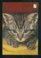 Gato. Ed. Fisa Nº 3048-1. Dep. Legal B. 17522-XVII. Circulada 1981. - Gatos