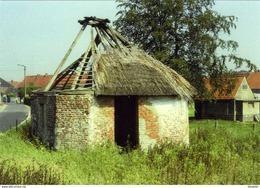 OUWEGEM - Zingem (O.Vl.) - Molen/moulin - Historische Prentkaart (1977) Van De Verdwenen Rosmolen In Verval - Zingem