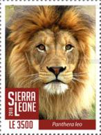 Z08 SRL1802local03a Sierra Leone 2018 Lions MNH ** Postfrisch - Sierra Leone (1961-...)