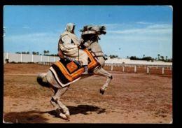 C310 LIBYA LIBIA - ARAB RIDER CAVALIERE ARABO CIRC. 1965 - Libya