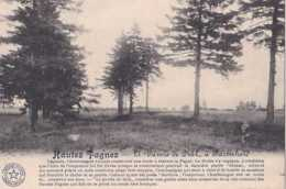 Jalhay - Hautes Fagnes - Li Paveie Dè Diâl à Baronheid - Pas Circulé - TBE - Jalhay