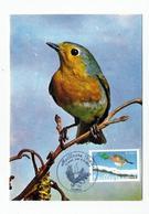 Carte Maximum  ROUGE GORGE (premier Jour & Meilleurs Voeux 2003) - Sperlingsvögel & Singvögel