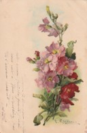 *** Illustrateur *** Fleurs - Klein Bouquet - Precurseur Timbrée TTB - Klein, Catharina