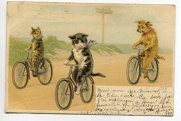 CHATS 0010 Chats  Et Chien Faisant De La Bicyclette Sur Route 1903 écrite Timbrée - Katzen
