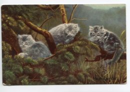 """CHATS 0038 Chats En Foret De Pins """" On The Loock Out """" - Cats"""