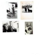 Lot 5 - Petite Photo (3) Chien Loup Berger Allemand Varsovie 1955 + Image Pieuse Saint Benigne + Cemoi N°38 - Foto