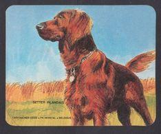 Chien Setter Irlandais Chasse Hunting Cartouche Legia FN Hersyal Ancien Autocollant Sticker - Autocollants