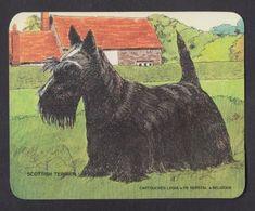 Chien Scottish Terrier Chasse Hunting Cartouche Legia FN Hersyal Ancien Autocollant Sticker - Autocollants