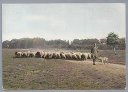 NL.- SCHAPEN En HERDER Op De Heide. Hond. 1962 - Dieren