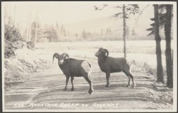 Mountain Sheep On Highway, Alberta, C.1940 - Byron Harmon RPPC - Alberta